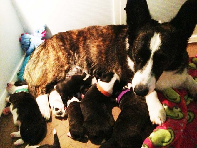 Lexi and puppies 6-9-13