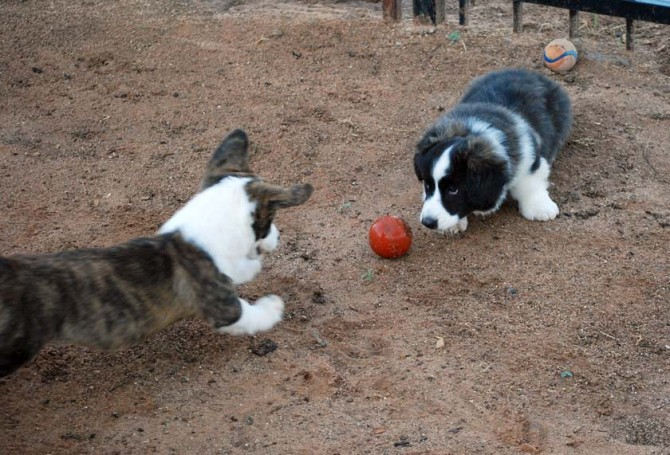 Newmie-Kimber-Ball 8-20-13 blog