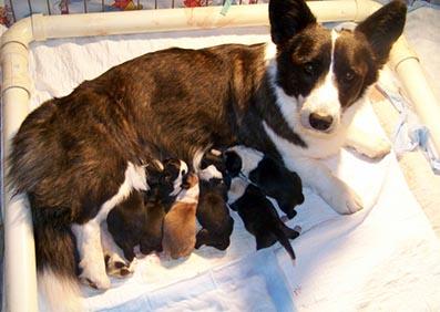 day 1 - Lowri babies 10-18-13