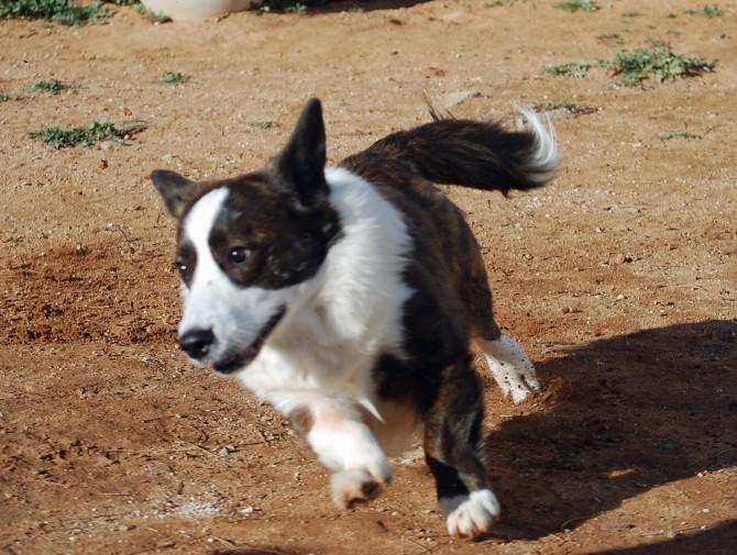 Cmon puppies 12-22-13