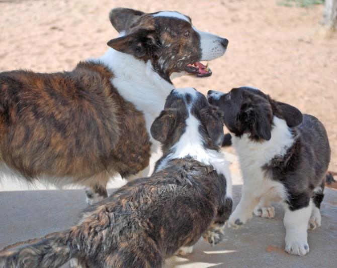 Chase and garndpuppies 1-25-14