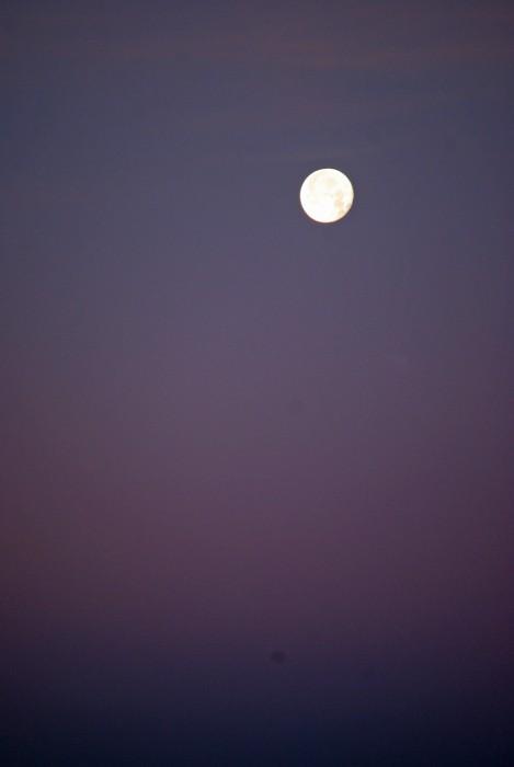 Vertical Moon 1-17-14