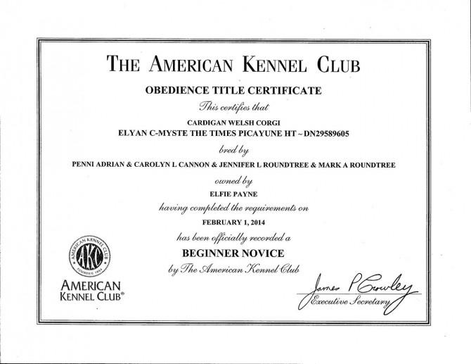 AKC BN Certificate blog