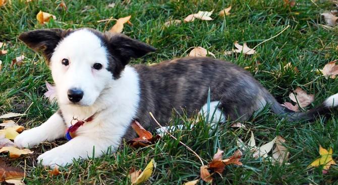 Watson - fall 2009