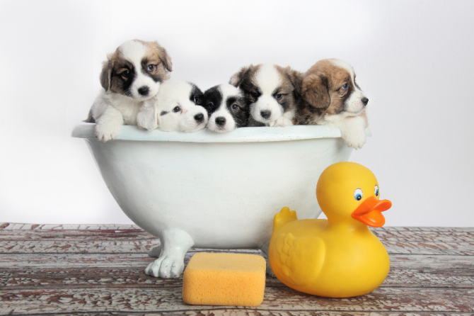 Babies in a tub
