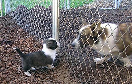 Chase meets Digger