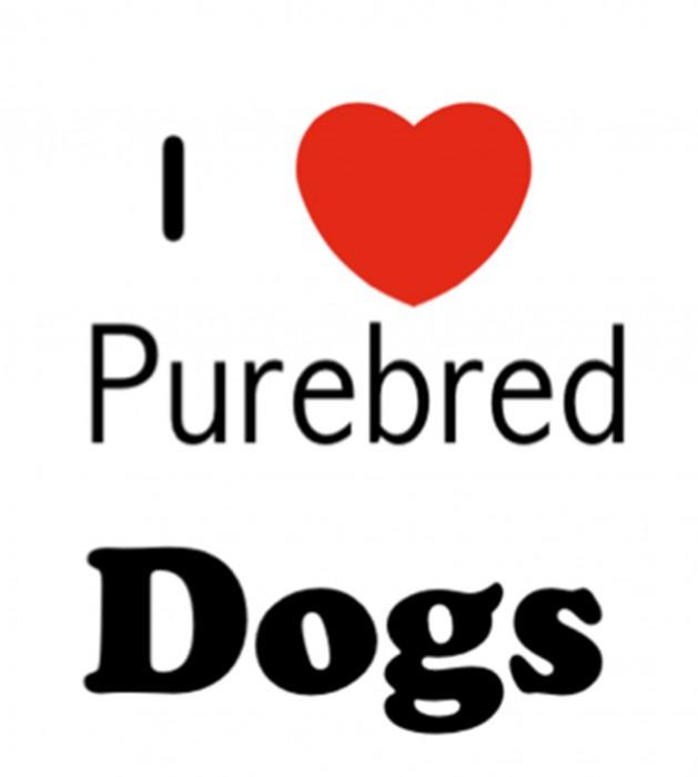 purebred- love